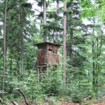 Forêts du Neuhof et de la Robertsau : non à l'ouverture de la chasse!